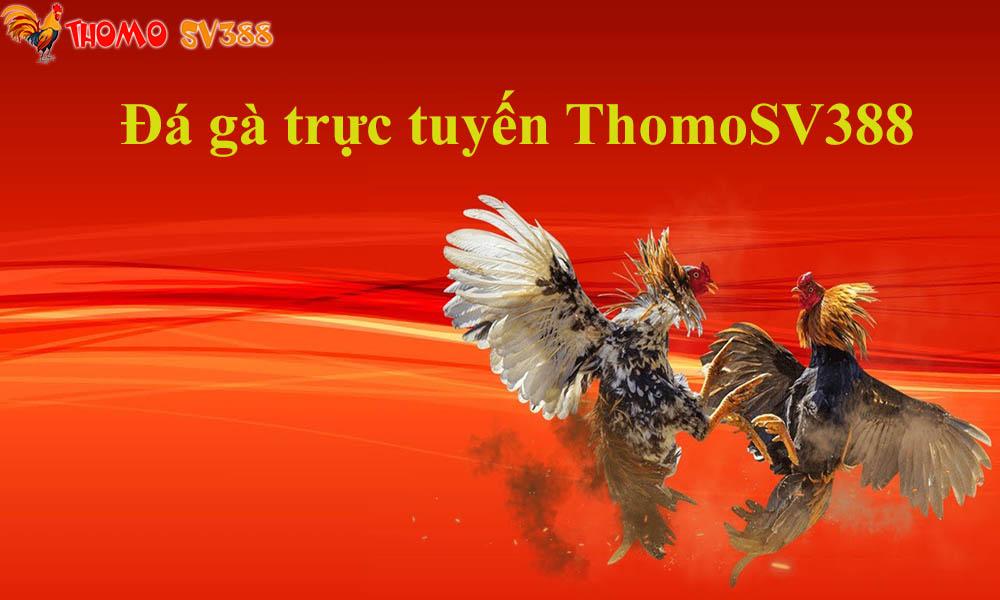 Đá gà trực tuyến ThomoSV388