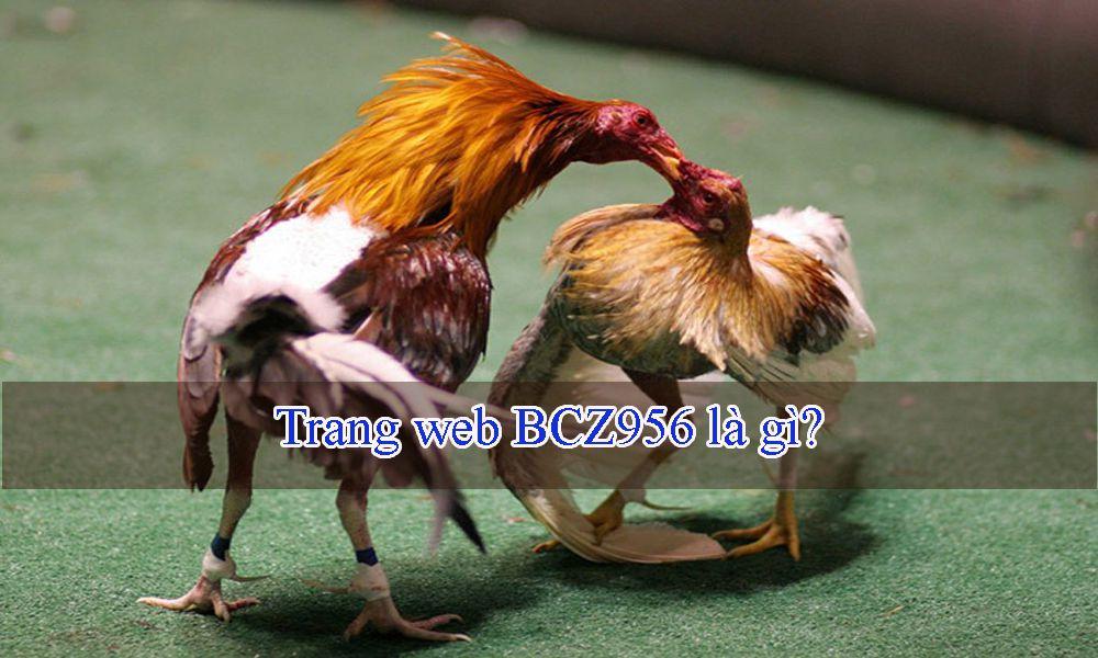 Trang web BCZ956 là gì